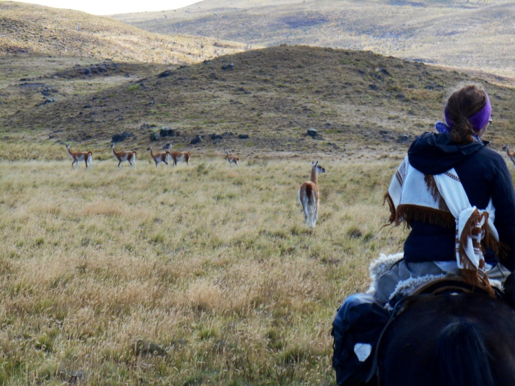 Days three and four - Herds of Guanacos