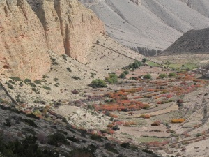 The Upper Mustang is a pretty barren area except around villages where people have irrigated and planted trees and crops.