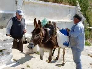 Donkey being loaded up with a jug of water.
