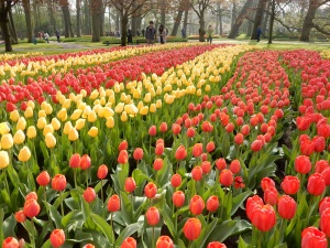 Kathy and I spent the entire day here at Keukenhof. Arguably the biggest spring flower display garden in the world.